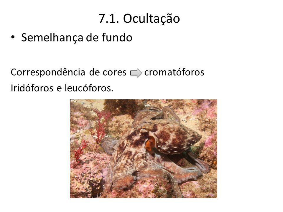 7.1. Ocultação Semelhança de fundo Correspondência de cores cromatóforos Iridóforos e leucóforos.