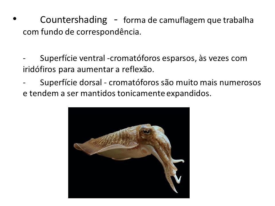 Countershading - forma de camuflagem que trabalha com fundo de correspondência. -Superfície ventral -cromatóforos esparsos, às vezes com iridófiros pa