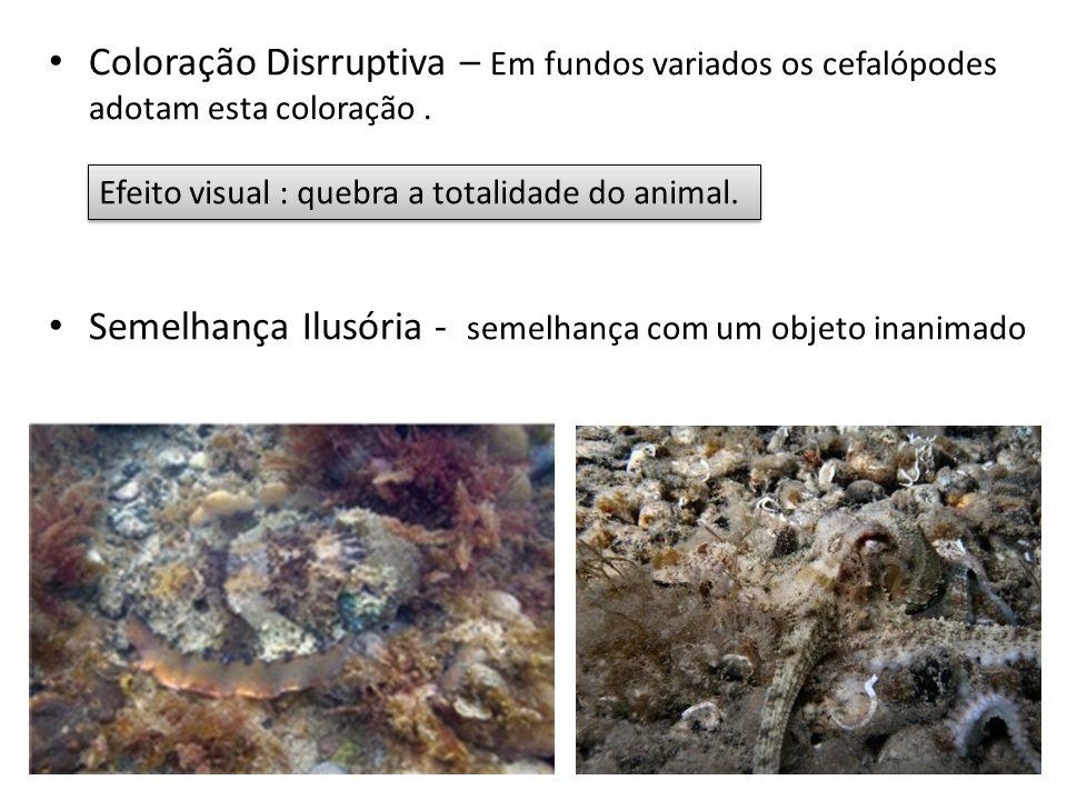 Coloração Disrruptiva – Em fundos variados os cefalópodes adotam esta coloração. Semelhança Ilusória - semelhança com um objeto inanimado Efeito visua