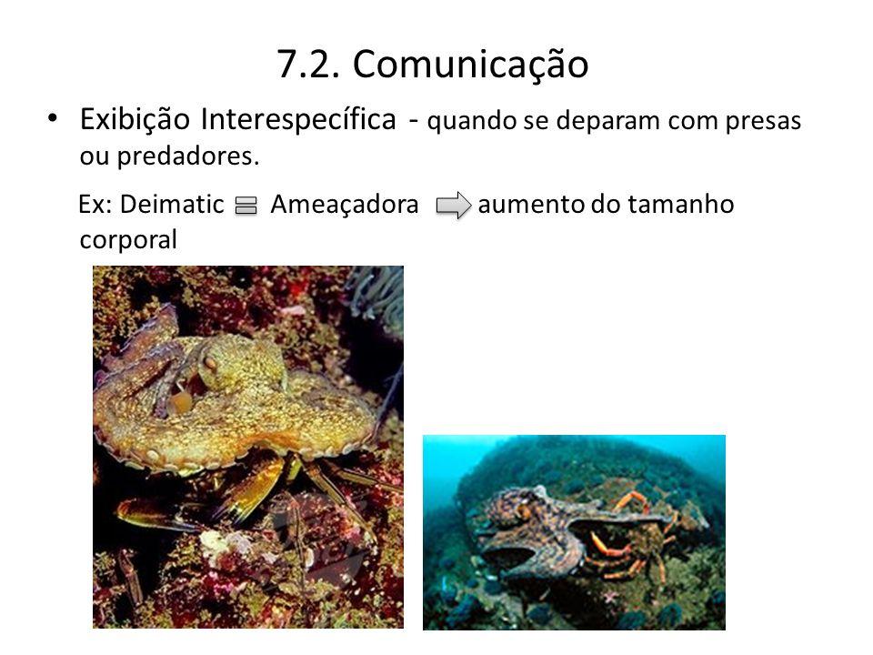 7.2. Comunicação Exibição Interespecífica - quando se deparam com presas ou predadores. Ex: Deimatic Ameaçadora aumento do tamanho corporal