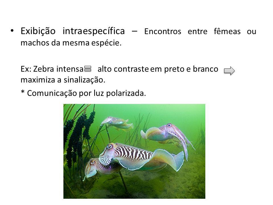 Exibição intraespecífica – Encontros entre fêmeas ou machos da mesma espécie. Ex: Zebra intensa alto contraste em preto e branco maximiza a sinalizaçã