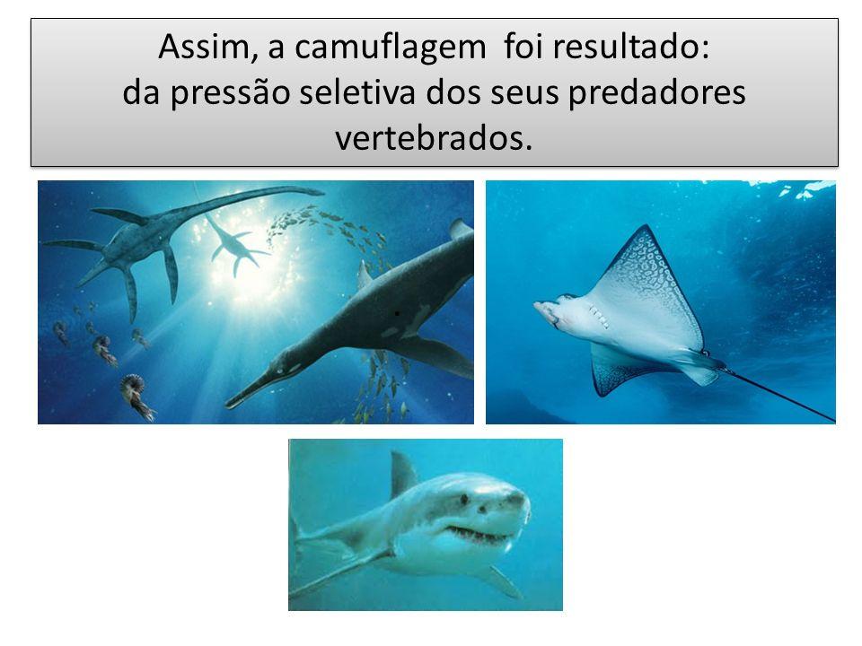 . Assim, a camuflagem foi resultado: da pressão seletiva dos seus predadores vertebrados. Assim, a camuflagem foi resultado: da pressão seletiva dos s
