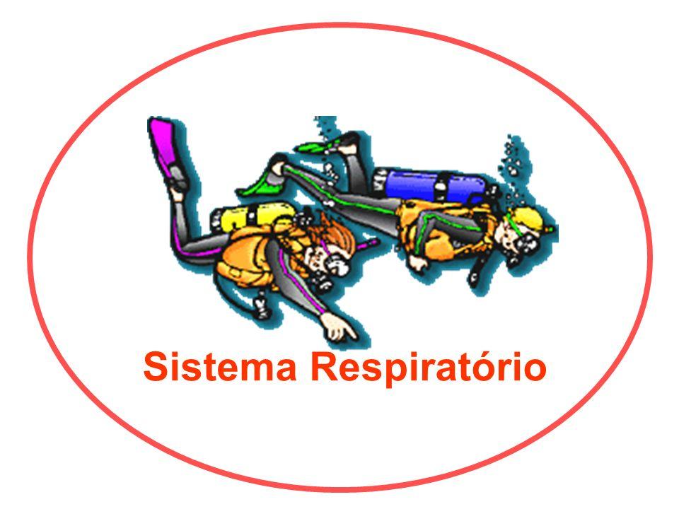 Limpa – Umedece - Aquece Porção condutora e porção respiratória Nasofaringe Brônquios Primários, Secundários, Terciários Bronquíolos