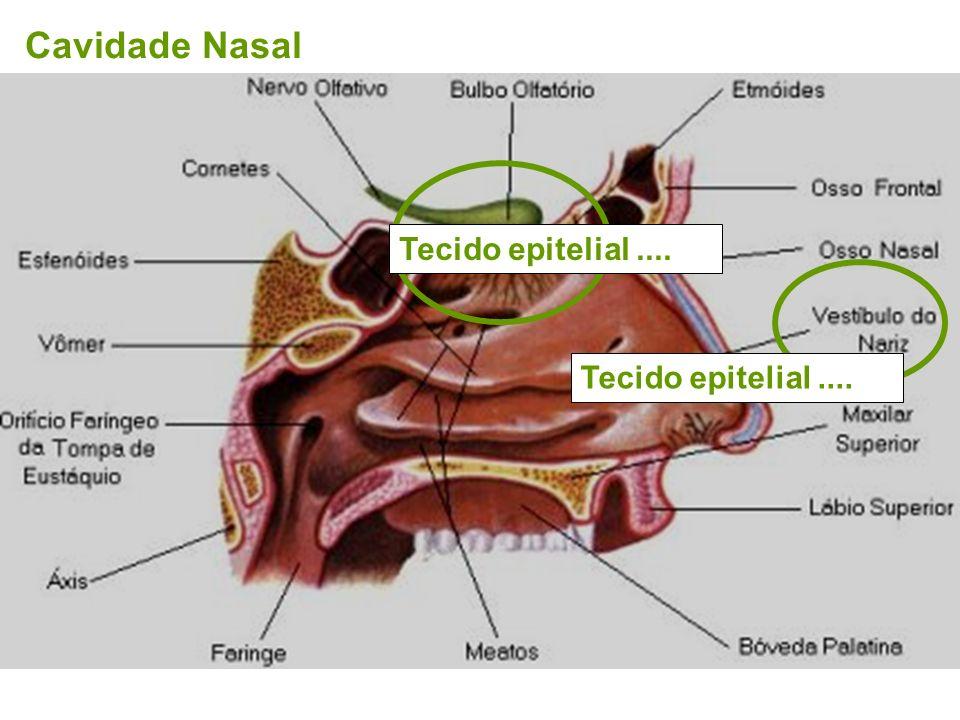 Área de kiesselback ZONA DE CONDUÇÃO Cavidade Nasal