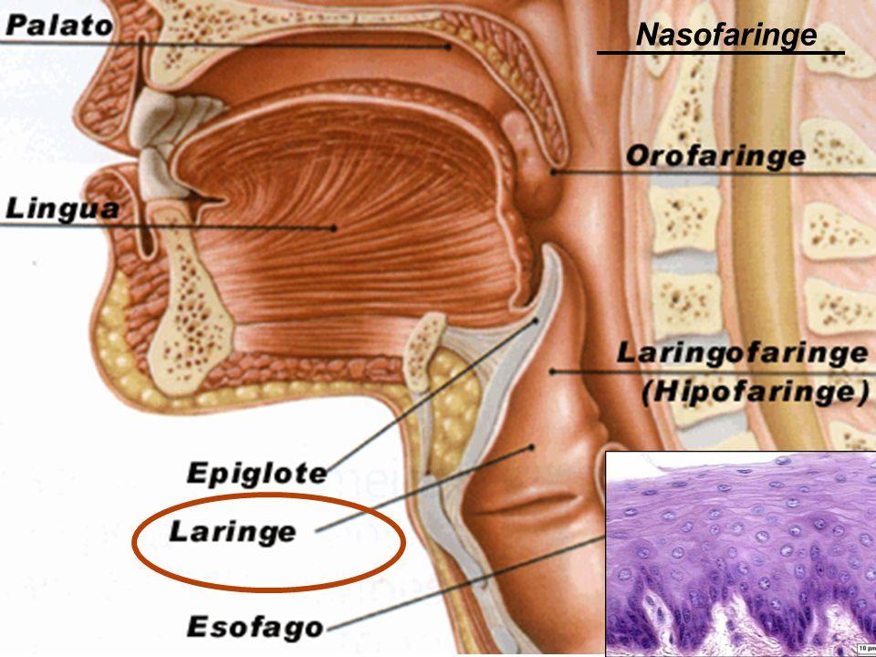 Nasofaringe