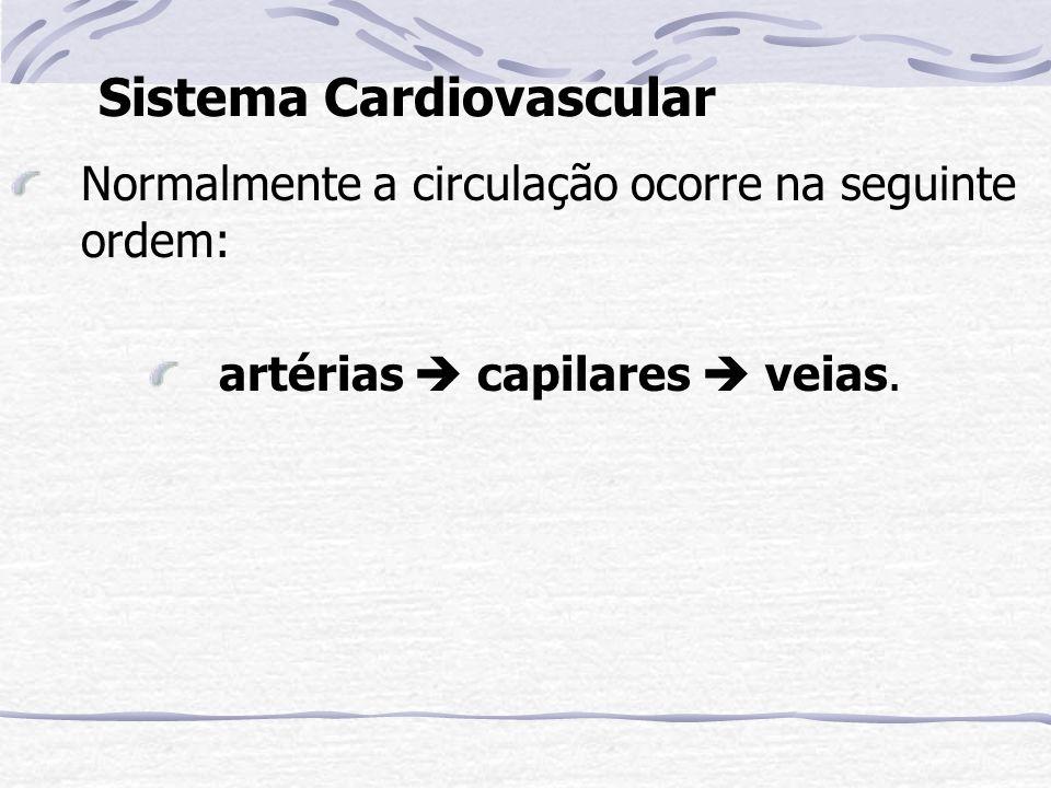 Circulação Sistêmica Coração órgãos coração Circulação Pulmonar Coração pulmões coração Esquema da Grande e Pequena Circulação