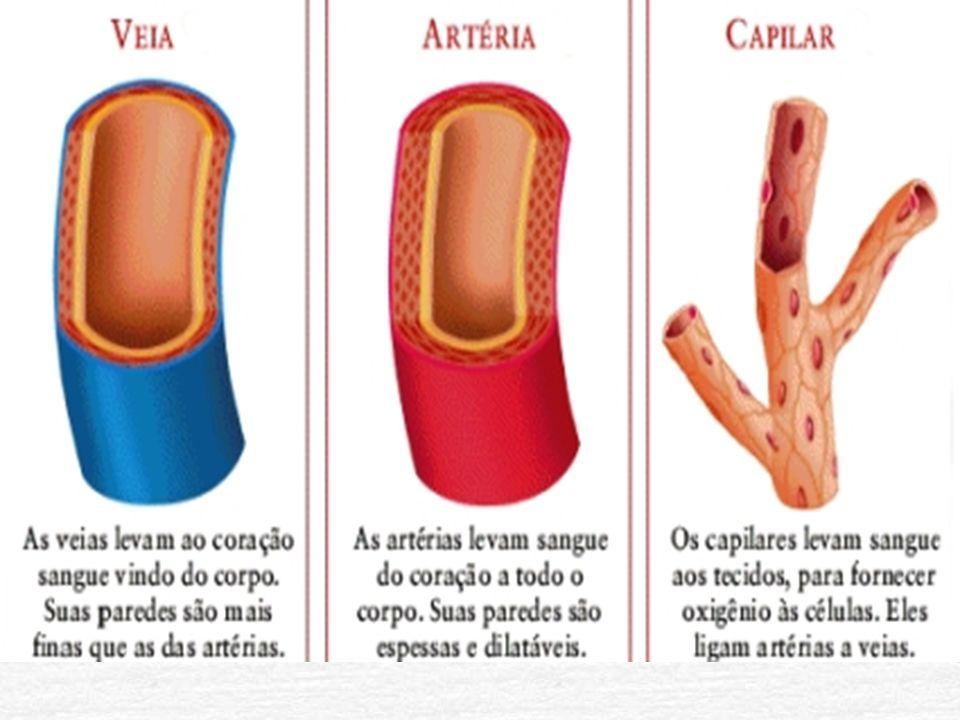 Câmaras do coração Átrios Ventrículos - Entre os átrios: septo interatrial - Entre os ventriculos: interventricular *Aurícula : na superfície anterior de cada átrio.