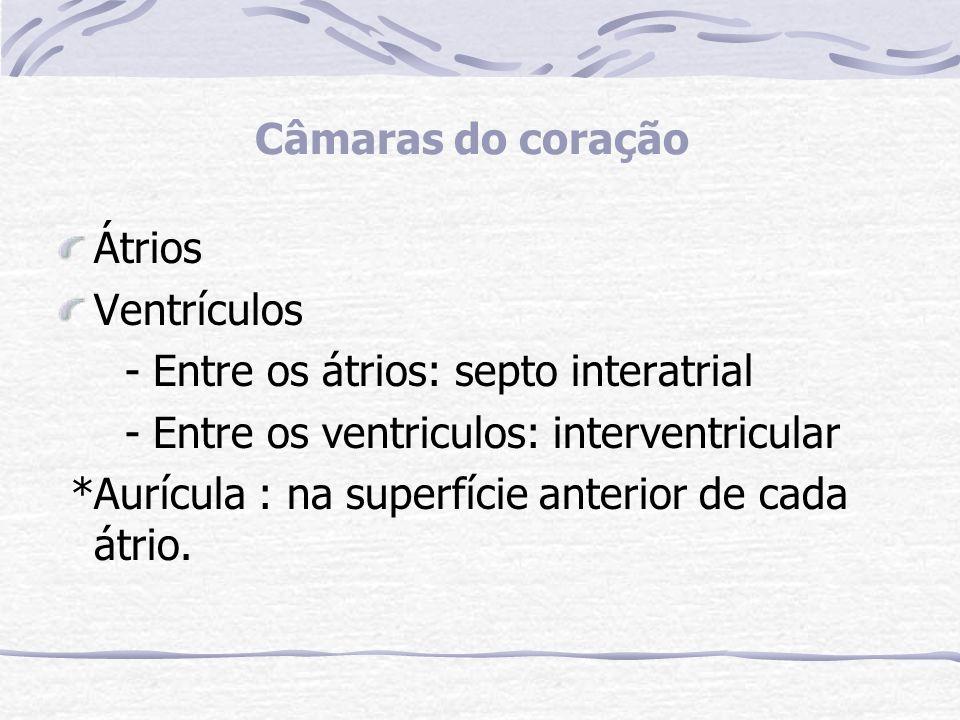GRANDES VASOS DO CORAÇÃO: Átrio direito (sangue venoso) recebe sangue através das veias cava superior, inferior e o seio coronário.