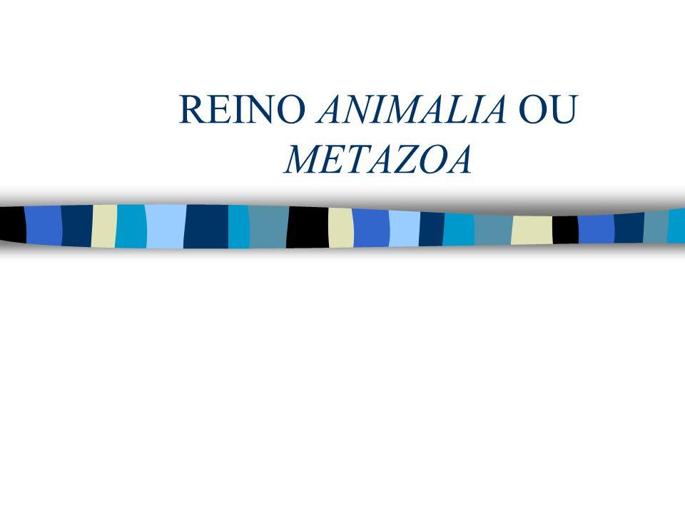 REINO ANIMALIA OU METAZOA