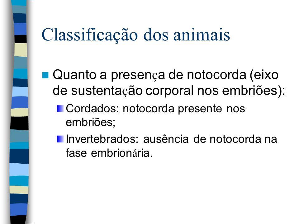 Classificação dos animais Quanto a presen ç a de notocorda (eixo de sustenta ç ão corporal nos embriões): Cordados: notocorda presente nos embriões; I