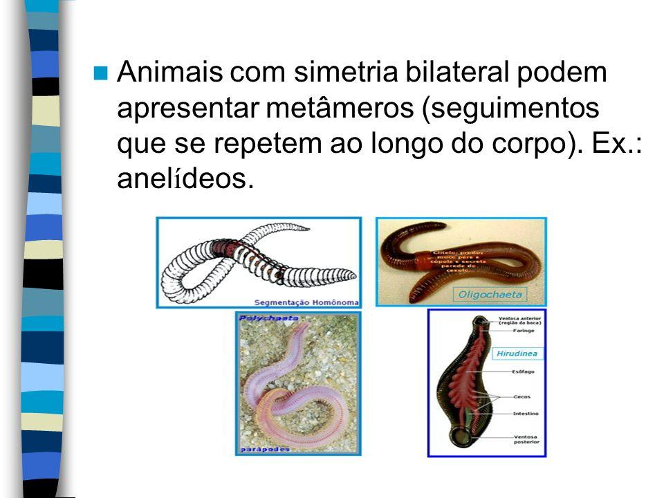 Animais com simetria bilateral podem apresentar metâmeros (seguimentos que se repetem ao longo do corpo). Ex.: anel í deos.