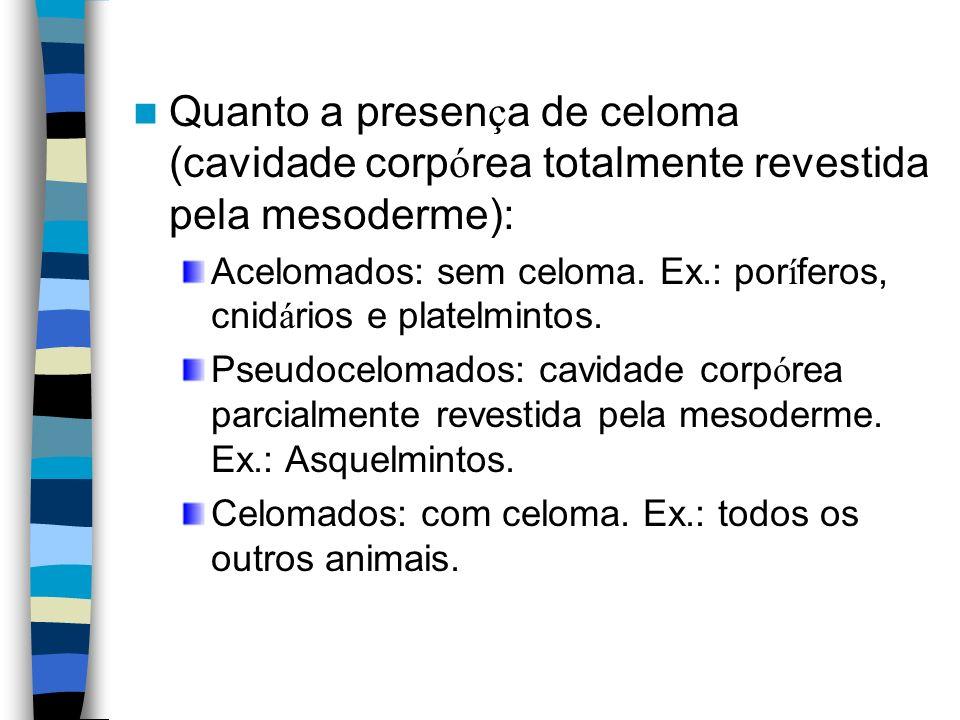 Quanto a presen ç a de celoma (cavidade corp ó rea totalmente revestida pela mesoderme): Acelomados: sem celoma. Ex.: por í feros, cnid á rios e plate