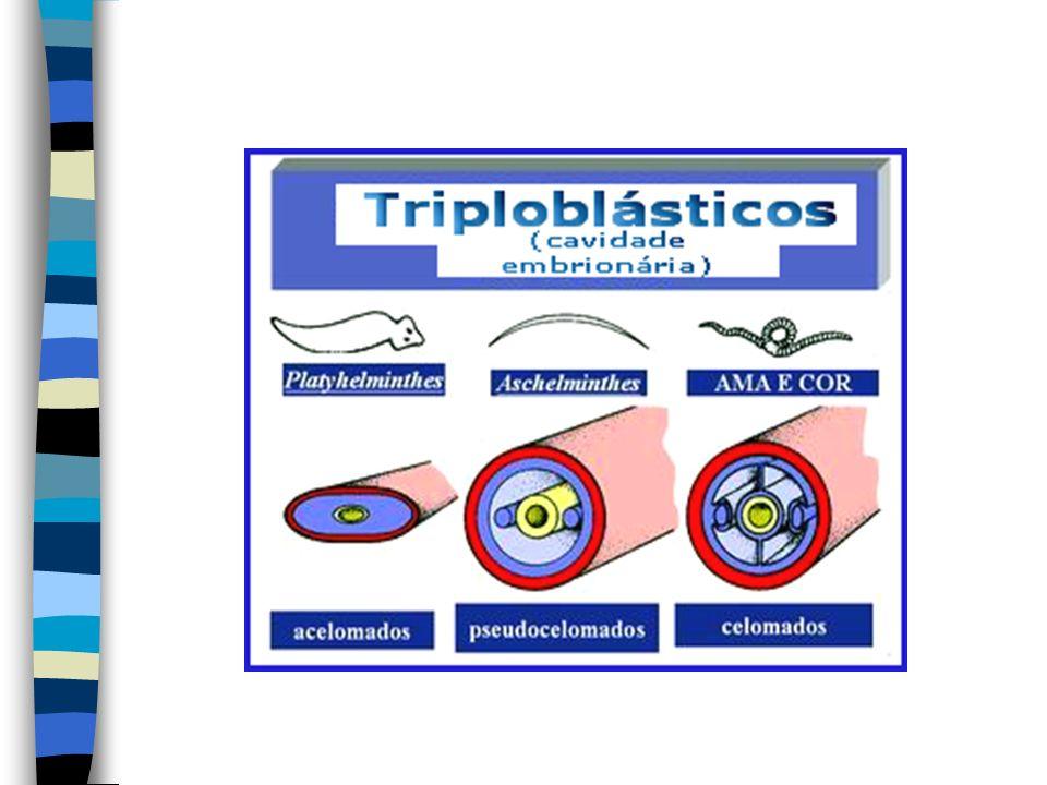 Quanto ao destino do blast ó poro (abertura presente na fase embrion á ria): Protostômios: o blast ó poro origina a boca no indiv í duo adulto.