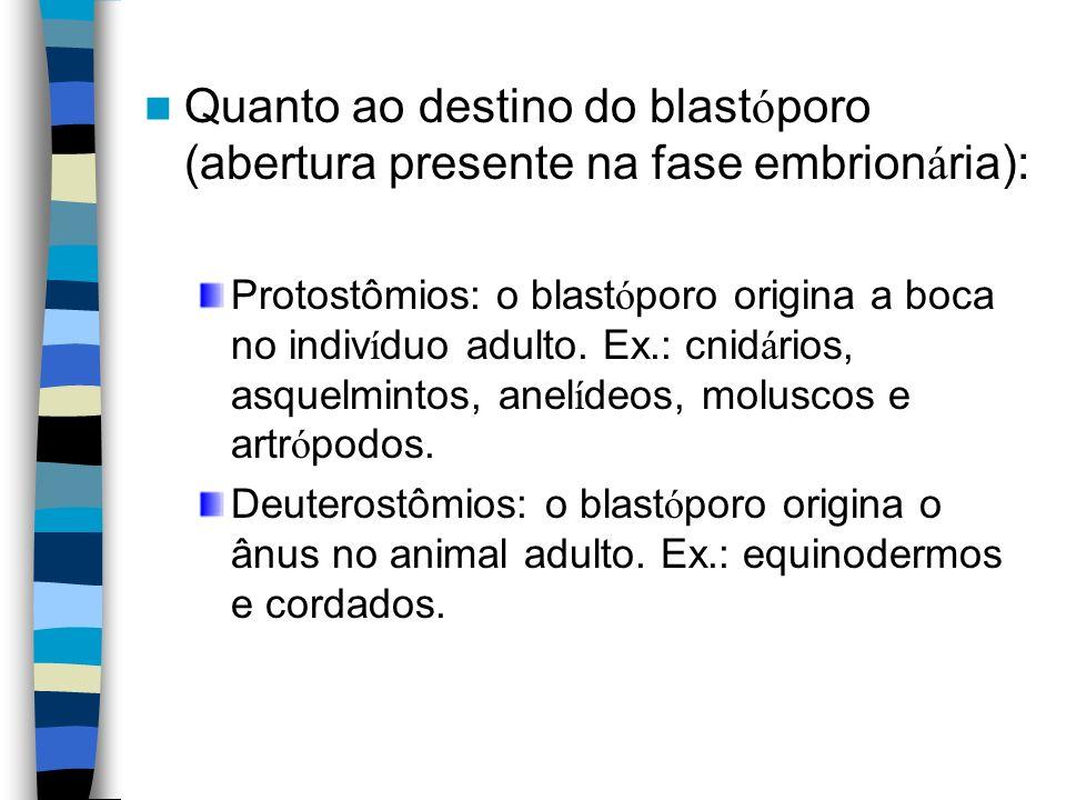 Quanto ao destino do blast ó poro (abertura presente na fase embrion á ria): Protostômios: o blast ó poro origina a boca no indiv í duo adulto. Ex.: c