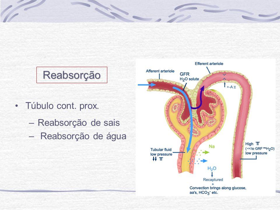 Túbulo cont. prox. –Reabsorção de sais – Reabsorção de água Reabsorção