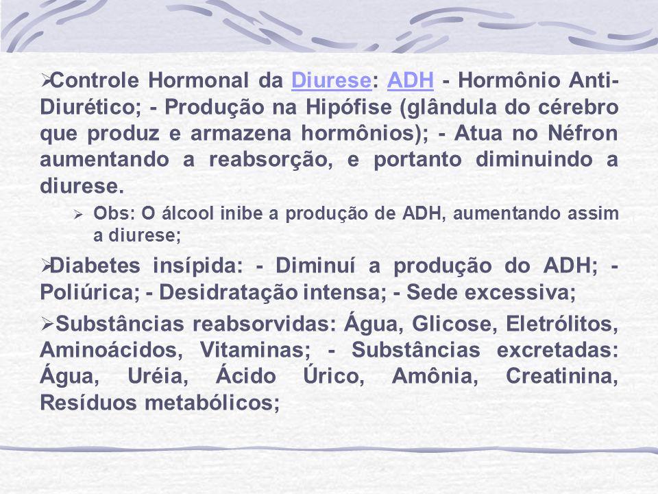 Controle Hormonal da Diurese: ADH - Hormônio Anti- Diurético; - Produção na Hipófise (glândula do cérebro que produz e armazena hormônios); - Atua no