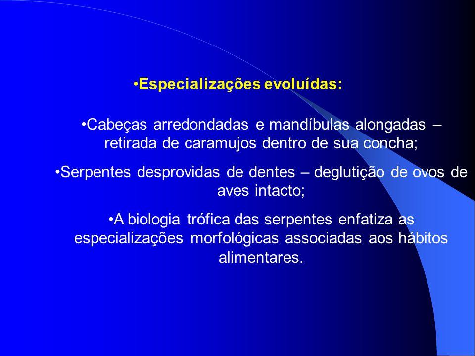 Especializações evoluídas: Cabeças arredondadas e mandíbulas alongadas – retirada de caramujos dentro de sua concha; Serpentes desprovidas de dentes –