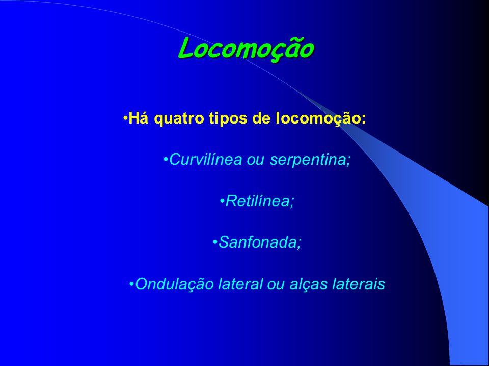 Locomoção Há quatro tipos de locomoção: Curvilínea ou serpentina; Retilínea; Sanfonada; Ondulação lateral ou alças laterais