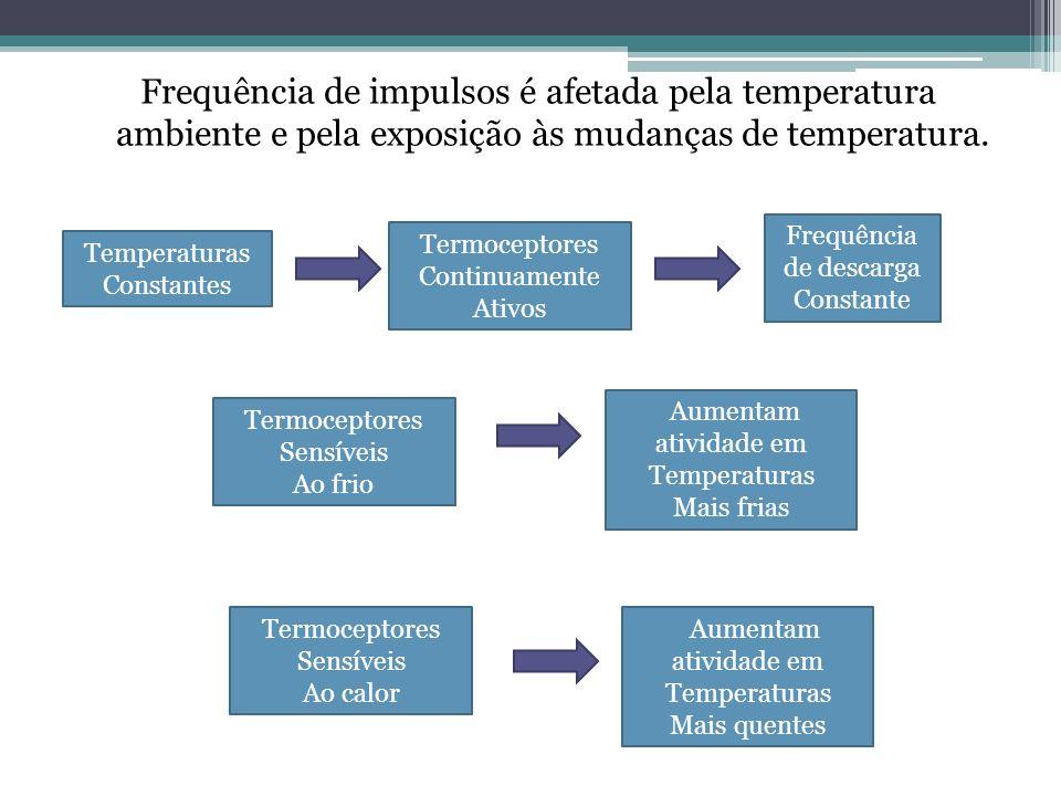 Frequência de impulsos é afetada pela temperatura ambiente e pela exposição às mudanças de temperatura. Temperaturas Constantes Termoceptores Continua