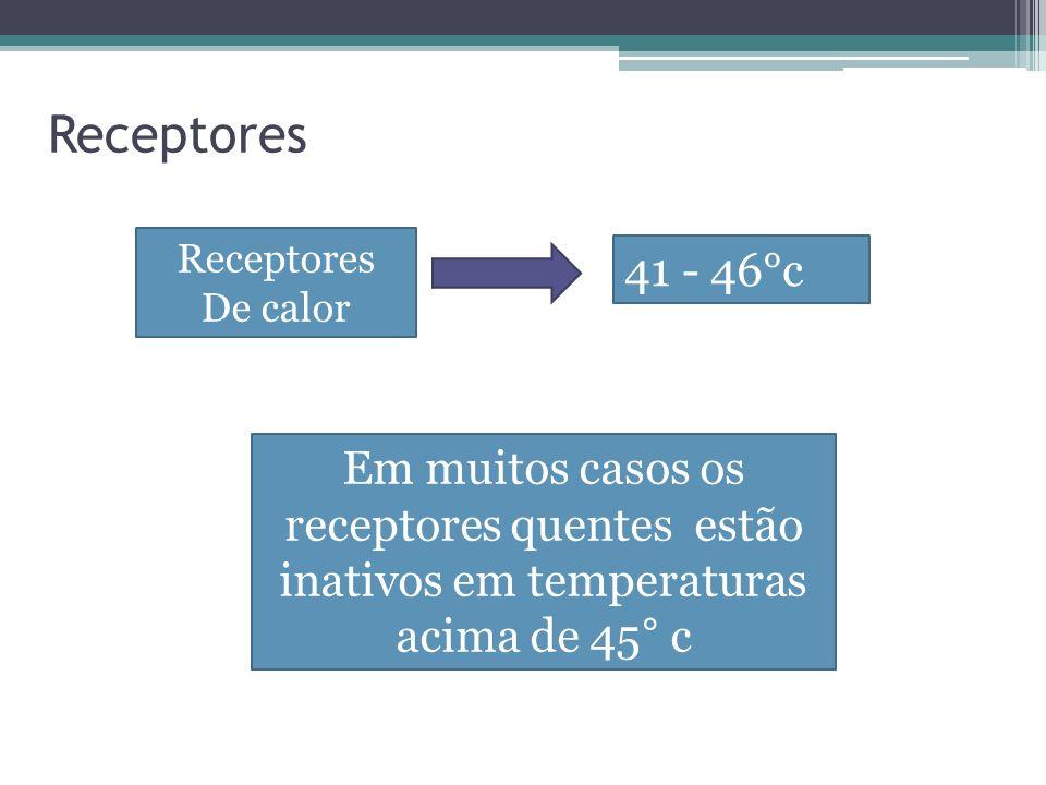 De calor 41 - 46°c Em muitos casos os receptores quentes estão inativos em temperaturas acima de 45° c Receptores