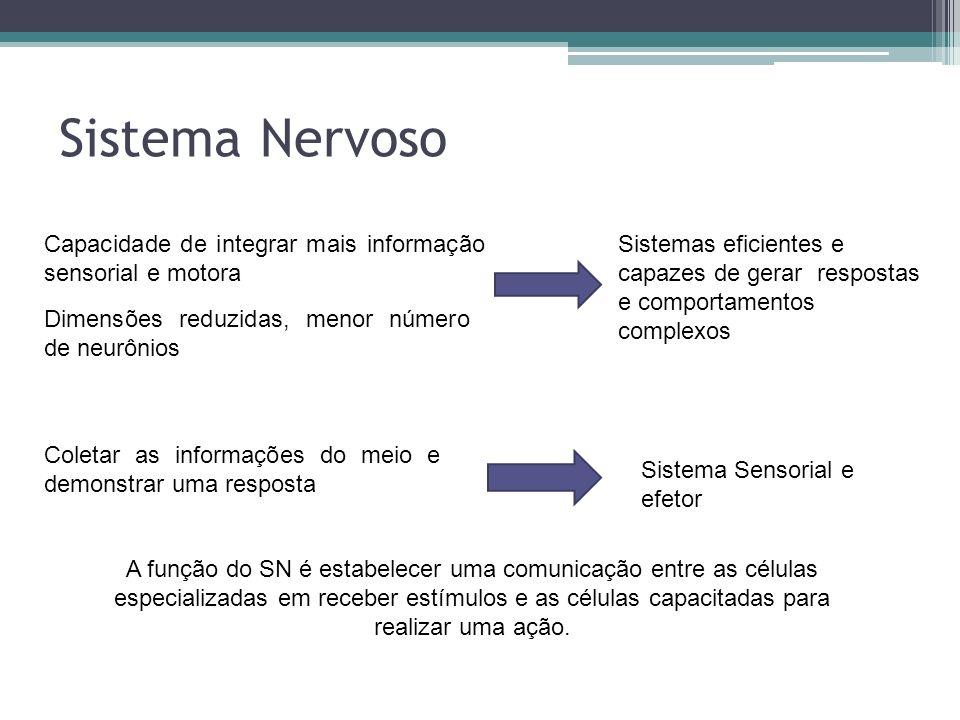 Sistema Nervoso Capacidade de integrar mais informação sensorial e motora Dimensões reduzidas, menor número de neurônios Sistemas eficientes e capazes