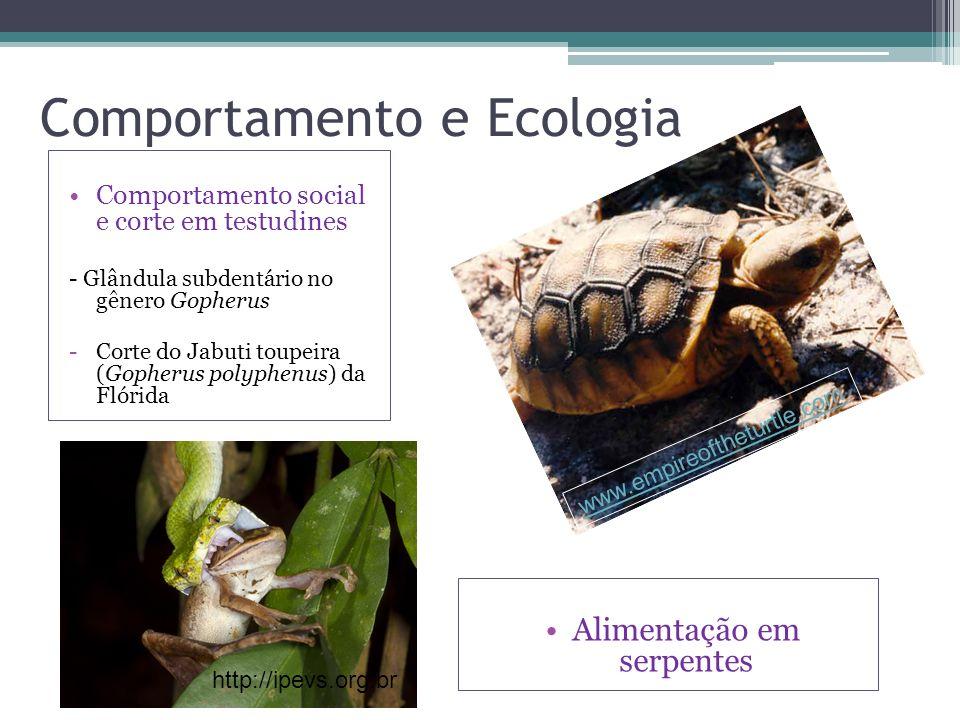 Comportamento e Ecologia www.empireoftheturtle.com Comportamento social e corte em testudines - Glândula subdentário no gênero Gopherus -Corte do Jabu