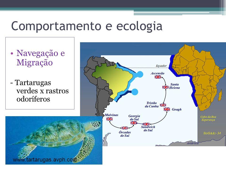 Comportamento e ecologia Navegação e Migração - Tartarugas verdes x rastros odoríferos www.tartarugas.avph.com