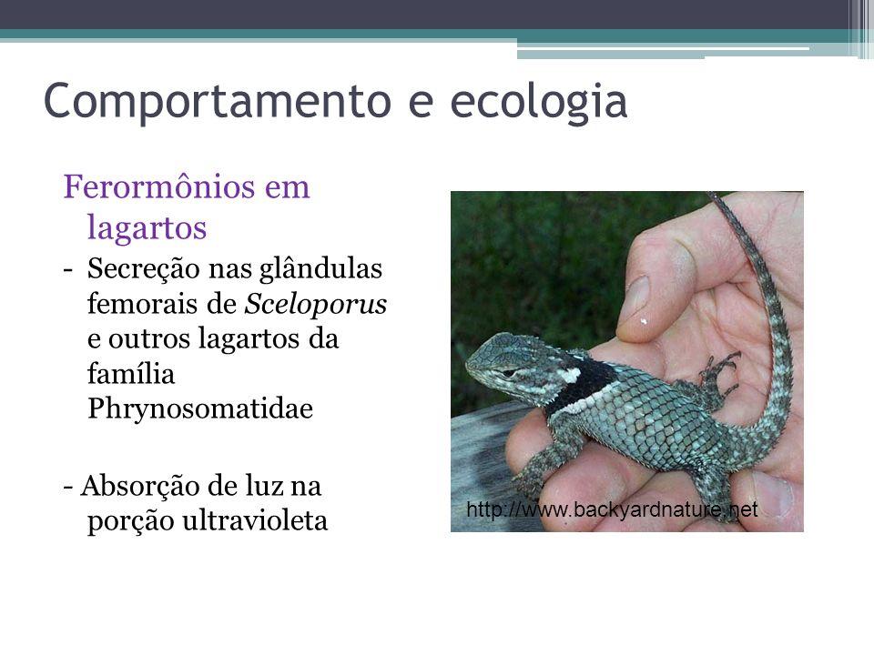Comportamento e ecologia Ferormônios em lagartos - Secreção nas glândulas femorais de Sceloporus e outros lagartos da família Phrynosomatidae - Absorç