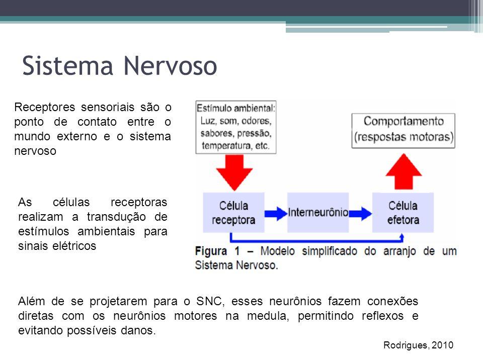 Sistema Nervoso Receptores sensoriais são o ponto de contato entre o mundo externo e o sistema nervoso As células receptoras realizam a transdução de