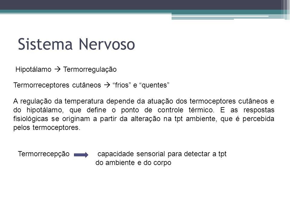 Sistema Nervoso Hipotálamo Termorregulação Termorreceptores cutâneos frios e quentes A regulação da temperatura depende da atuação dos termoceptores c