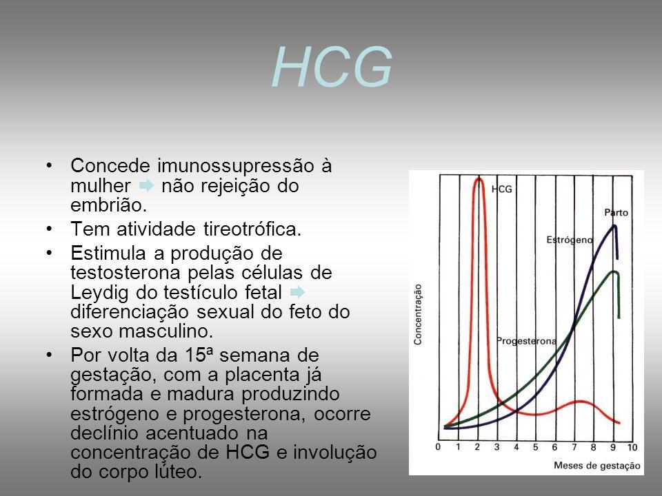 HORMÔNIOS DA GRAVIDEZ 1- Gonadotrofina coriônica humana (HCG): hormônio glicoproteíco, secretado pelas células do trofoblasto após nidação mantém o co