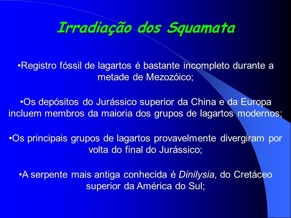 Irradiação dos Squamata Registro fóssil de lagartos é bastante incompleto durante a metade de Mezozóico; Os depósitos do Jurássico superior da China e