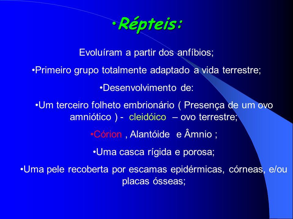 Répteis:Répteis: Evoluíram a partir dos anfíbios; Primeiro grupo totalmente adaptado a vida terrestre; Desenvolvimento de: Um terceiro folheto embrion