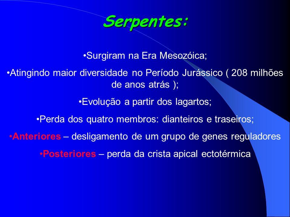 Serpentes: Surgiram na Era Mesozóica; Atingindo maior diversidade no Período Jurássico ( 208 milhões de anos atrás ); Evolução a partir dos lagartos;