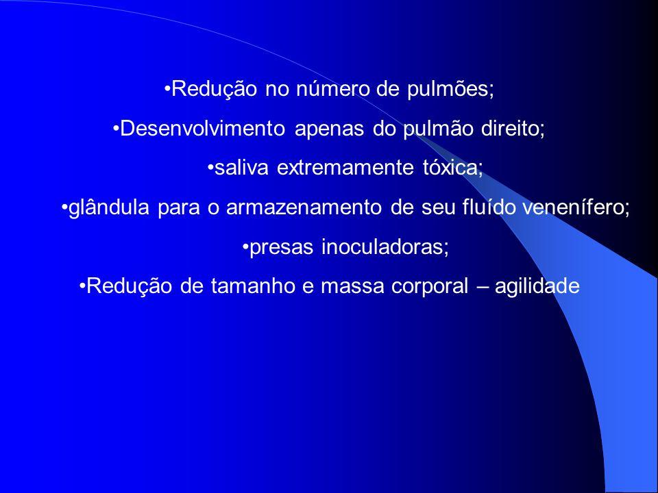 Redução no número de pulmões; Desenvolvimento apenas do pulmão direito; saliva extremamente tóxica; glândula para o armazenamento de seu fluído venení