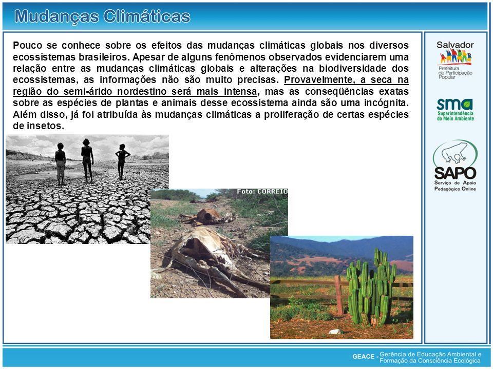 Pouco se conhece sobre os efeitos das mudanças climáticas globais nos diversos ecossistemas brasileiros. Apesar de alguns fenômenos observados evidenc