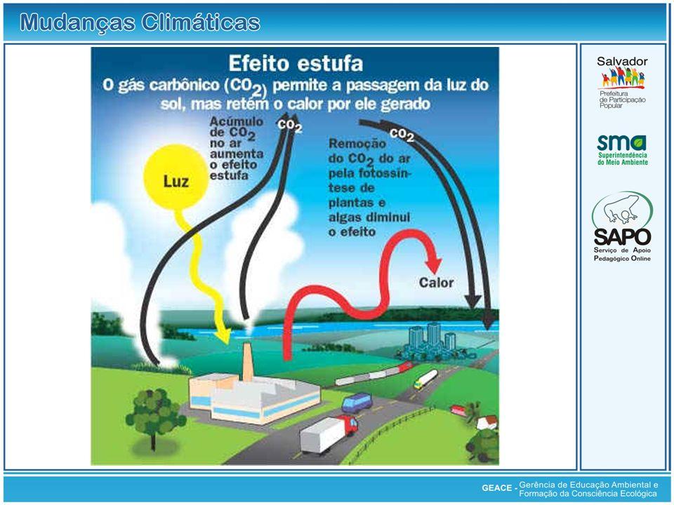 Os ecossistemas terrestres (incluindo vegetação e solo) desempenham importante papel no ciclo do carbono.
