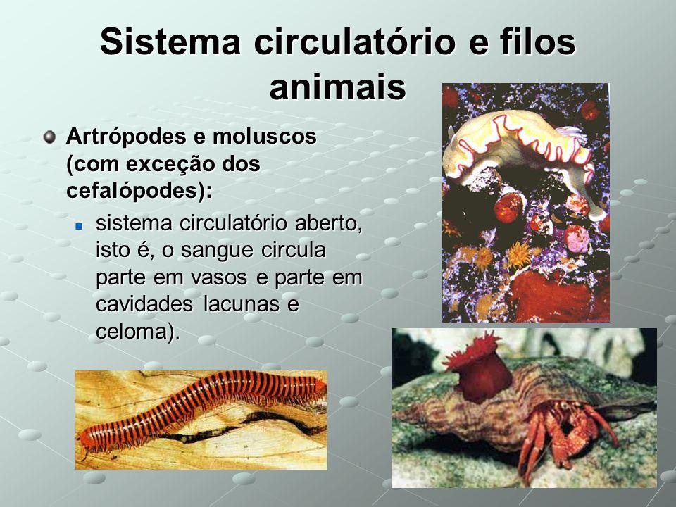 Sistema circulatório e filos animais Artrópodes e moluscos (com exceção dos cefalópodes): sistema circulatório aberto, isto é, o sangue circula parte