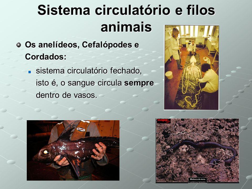 Sistema circulatório e filos animais Os anelídeos, Cefalópodes e Cordados: sistema circulatório fechado, isto é, o sangue circula sempre dentro de vas