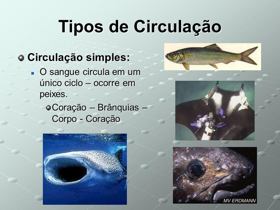 Tipos de Circulação Circulação simples: O sangue circula em um único ciclo – ocorre em peixes. O sangue circula em um único ciclo – ocorre em peixes.