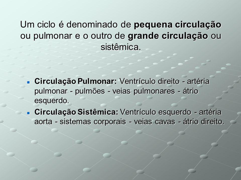 Um ciclo é denominado de pequena circulação ou pulmonar e o outro de grande circulação ou sistêmica. Circulação Pulmonar: Ventrículo direito - artéria