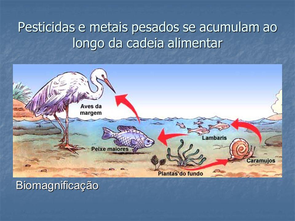 Pesticidas e metais pesados se acumulam ao longo da cadeia alimentar Biomagnificação