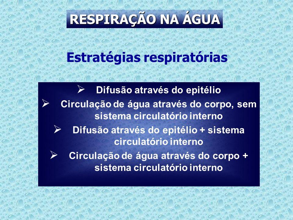 RESPIRAÇÃO NA ÁGUA Estratégias respiratórias Difusão através do epitélio Circulação de água através do corpo, sem sistema circulatório interno Difusão