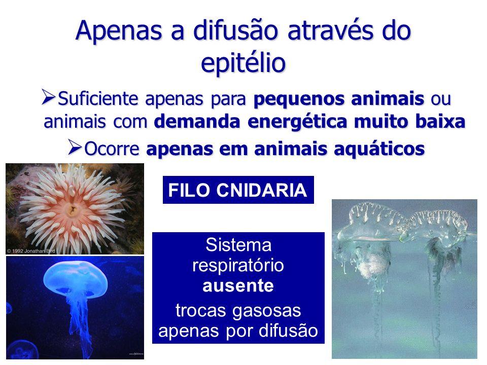 Apenas a difusão através do epitélio Suficiente apenas para pequenos animais ou animais com demanda energética muito baixa Suficiente apenas para pequ