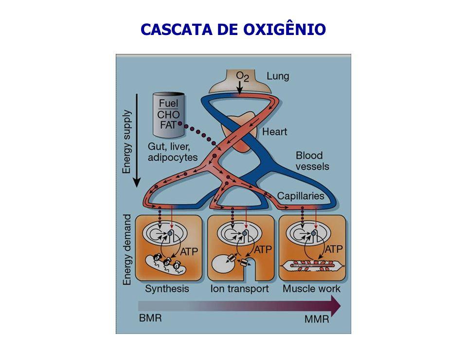 natureza do gás (solubilidade característica) pressão do gás na fase gasosa temperatura presença de solutos SOLUBILIDADE DOS GASES NA ÁGUA DEPENDEOxigênio 34,1 ml O 2.