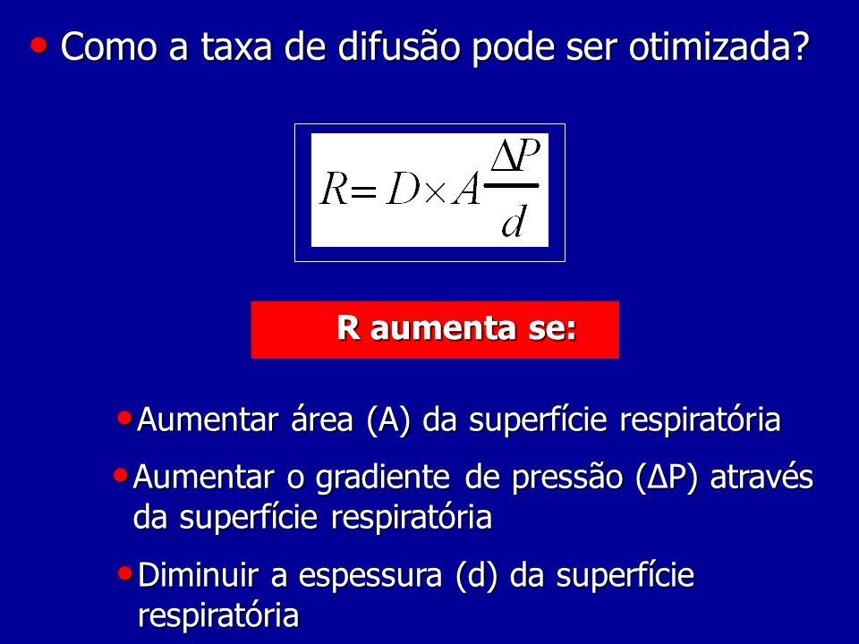 Como a taxa de difusão pode ser otimizada? Como a taxa de difusão pode ser otimizada? R aumenta se: Aumentar área (A) da superfície respiratória Aumen