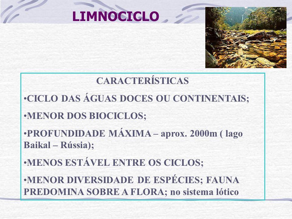 LIMNOCICLO CARACTERÍSTICAS CICLO DAS ÁGUAS DOCES OU CONTINENTAIS; MENOR DOS BIOCICLOS; PROFUNDIDADE MÁXIMA – aprox. 2000m ( lago Baikal – Rússia); MEN