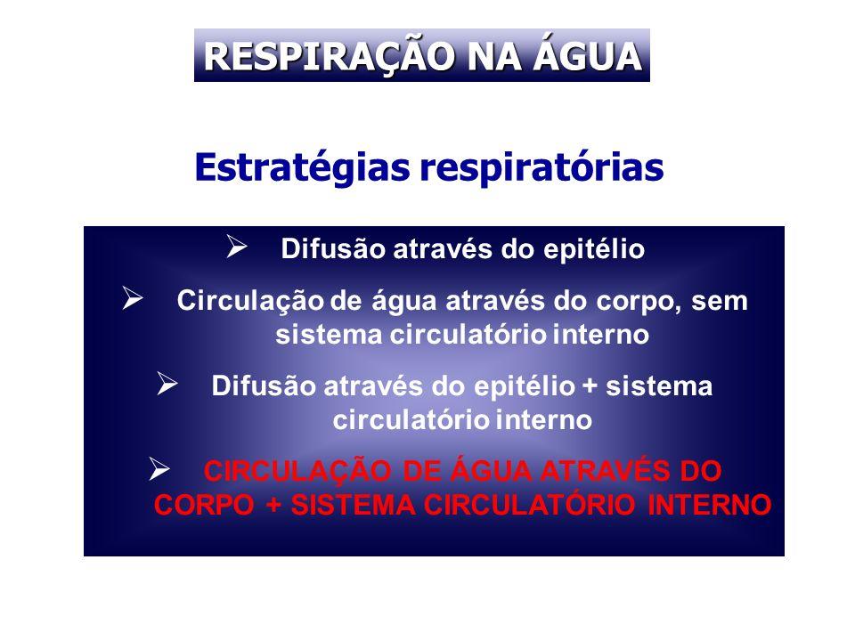 Estratégias respiratórias Difusão através do epitélio Circulação de água através do corpo, sem sistema circulatório interno Difusão através do epitéli