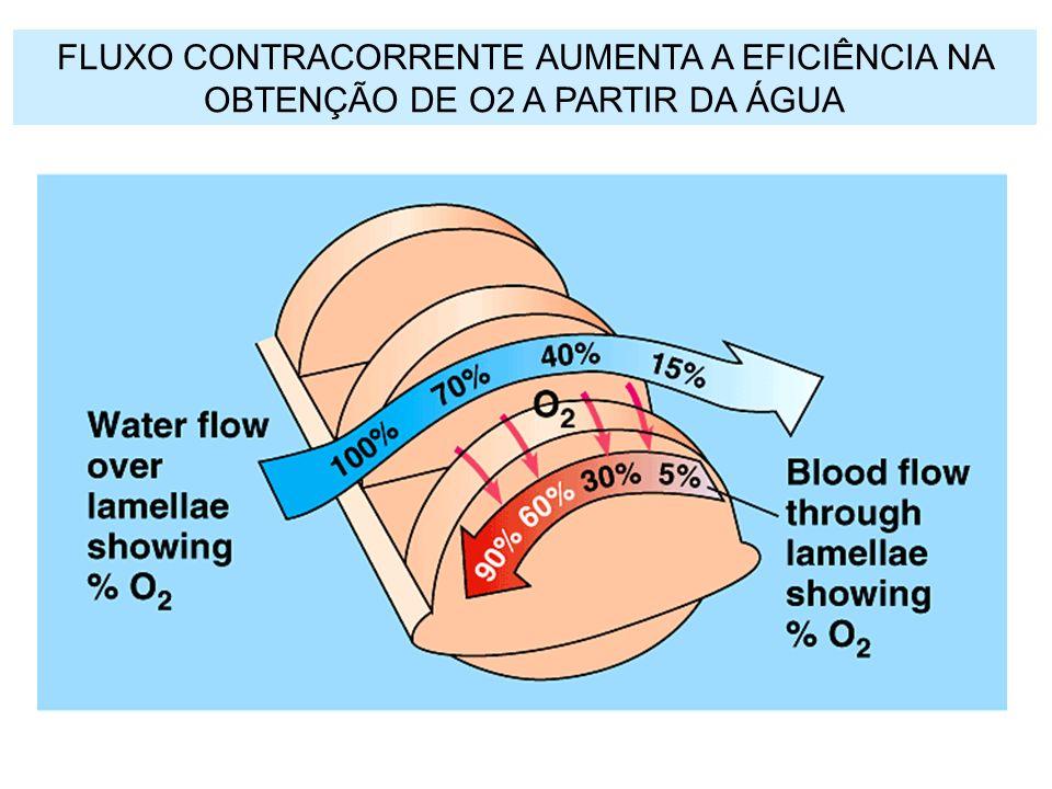 FLUXO CONTRACORRENTE AUMENTA A EFICIÊNCIA NA OBTENÇÃO DE O2 A PARTIR DA ÁGUA