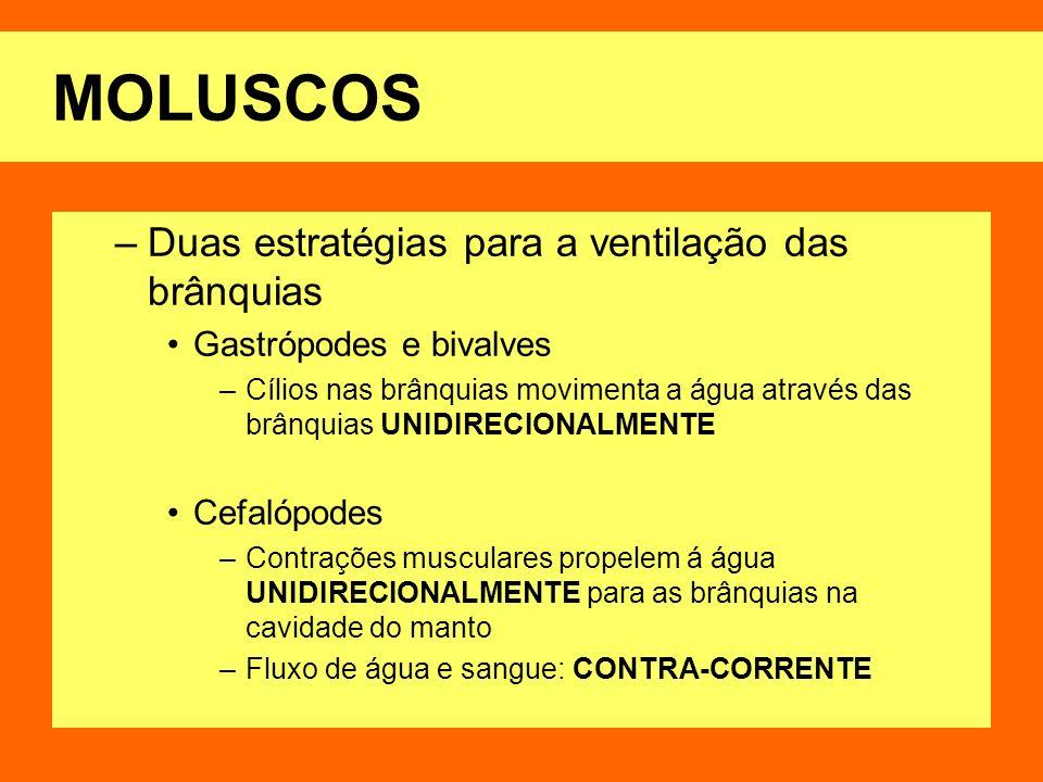MOLUSCOS –Duas estratégias para a ventilação das brânquias Gastrópodes e bivalves –Cílios nas brânquias movimenta a água através das brânquias UNIDIRE